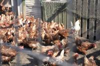【湘南のこだわり食材詰め合せ】 新鮮「旬の湘南野菜」& こだわり「放し飼い有精卵(20個)」